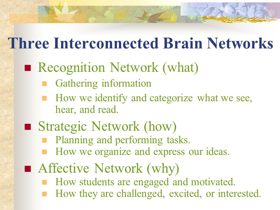 Three Interconnected Brain Networks Recognition Network (what) Gathering information How we identify and categorize what we see, hear, and read. Strat