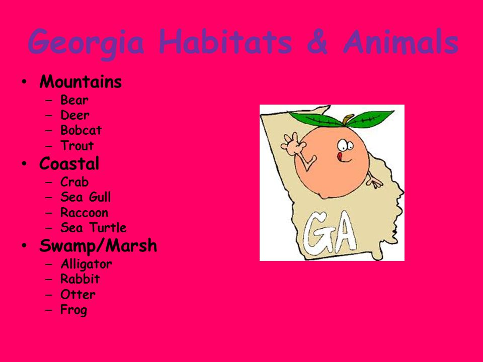 Georgia Habitats & Animals Mountains – Bear – Deer – Bobcat – Trout Coastal – Crab – Sea Gull – Raccoon – Sea Turtle Swamp/Marsh – Alligator – Rabbit – Otter – Frog