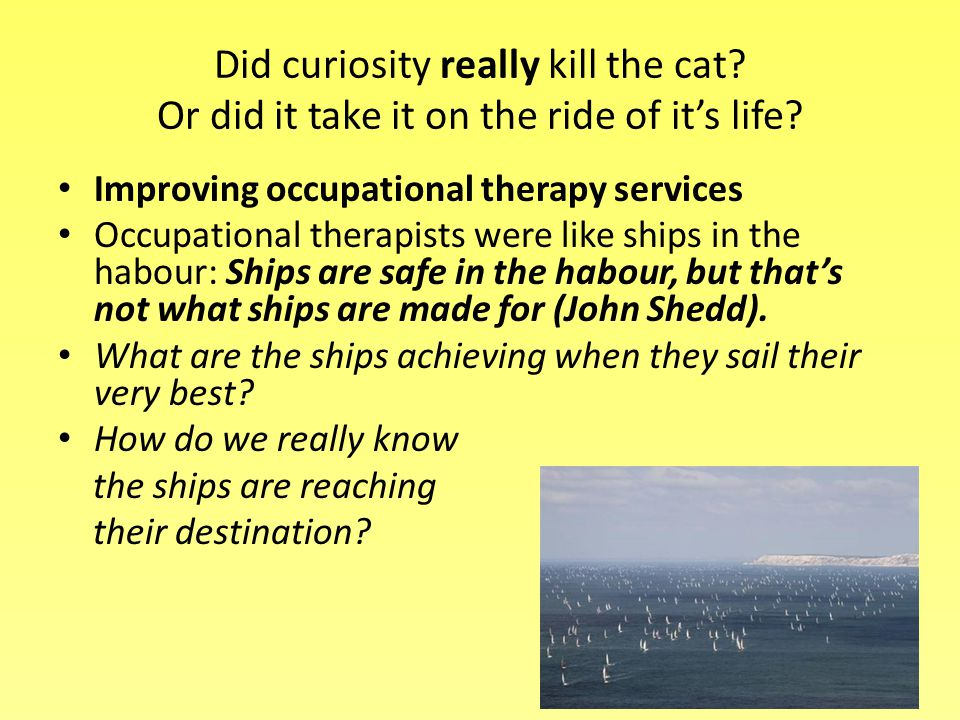 Did curiosity really kill the cat. Or did it take it on the ride of it's life.