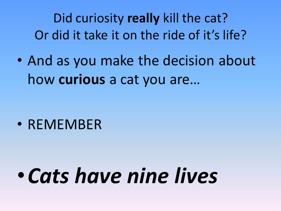 How curious a cat are you?