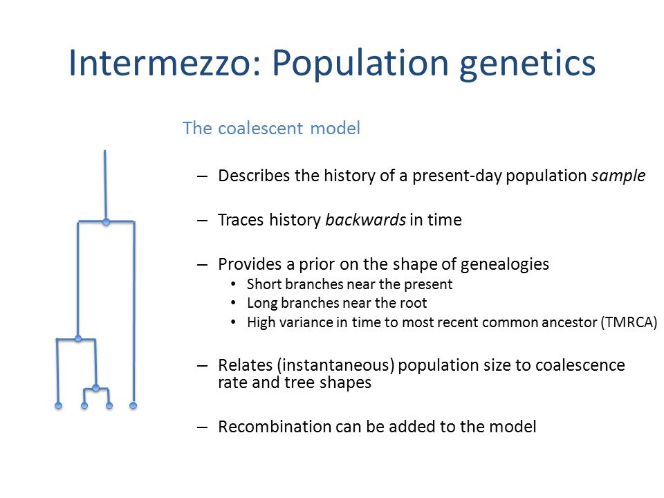 Intermezzo: Population genetics The coalescent model – Describes the history of a present-day population sample – Traces history backwards in time – Provides a prior on the shape of genealogies Short branches near the present Long branches near the root High variance in time to most recent common ancestor (TMRCA) – Relates (instantaneous) population size to coalescence rate and tree shapes – Recombination can be added to the model