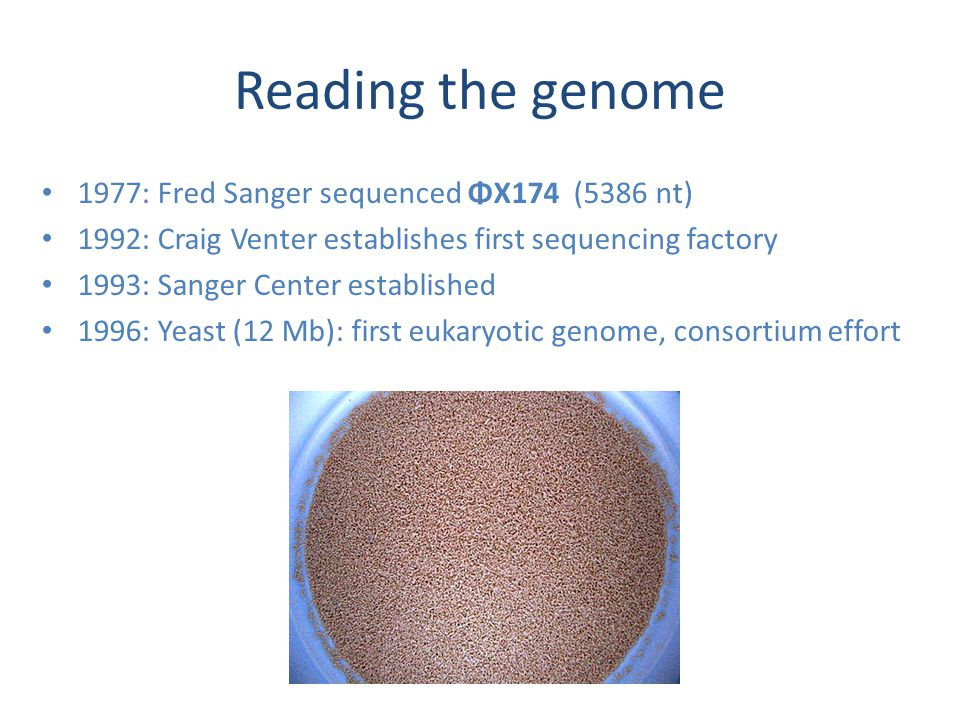 Reading the genome 1977: Fred Sanger sequenced ΦX174 (5386 nt) 1992: Craig Venter establishes first sequencing factory 1993: Sanger Center established 1996: Yeast (12 Mb): first eukaryotic genome, consortium effort