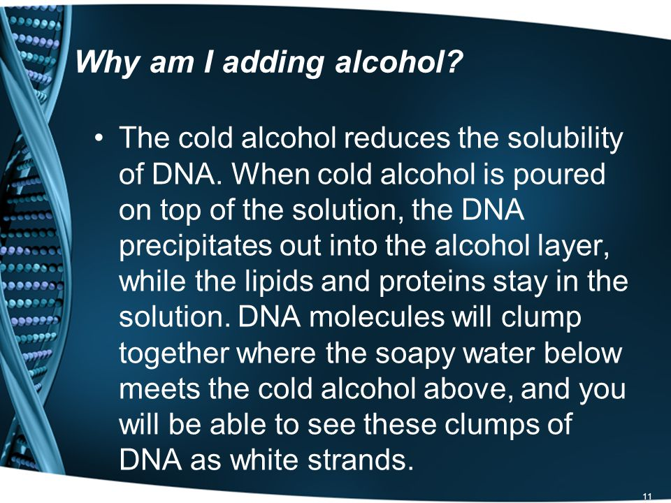 11 Why am I adding alcohol. The cold alcohol reduces the solubility of DNA.