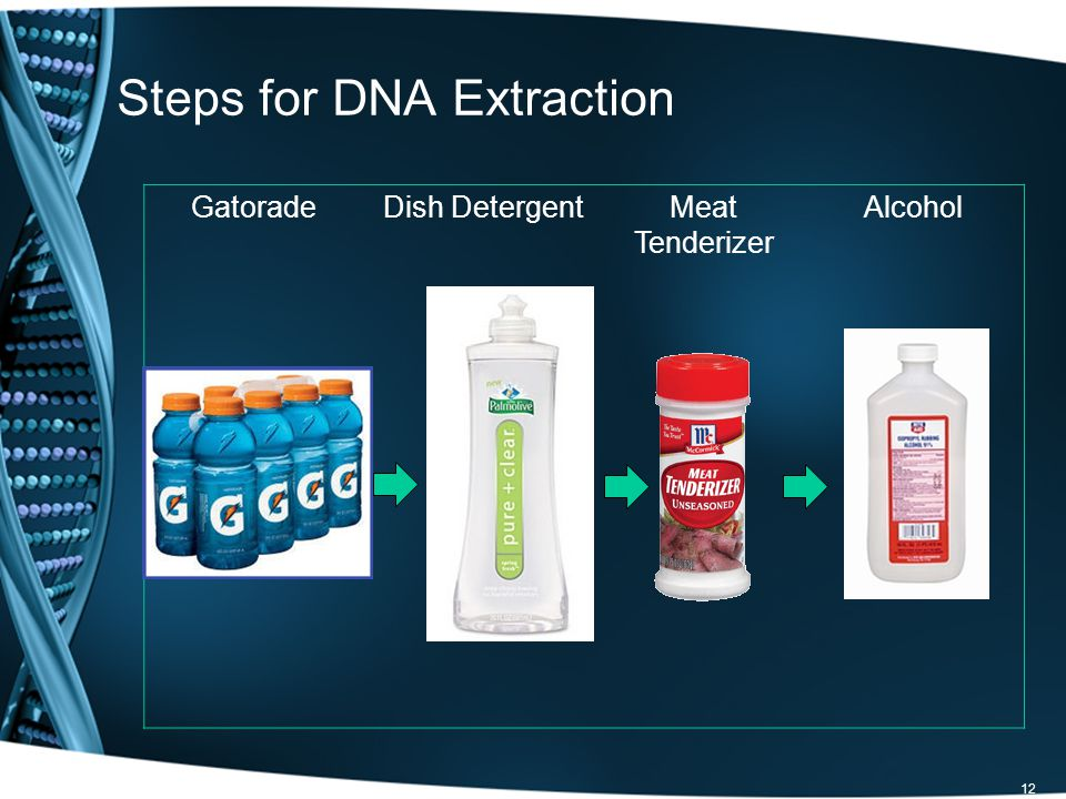 12 Steps for DNA Extraction GatoradeDish DetergentMeat Tenderizer Alcohol