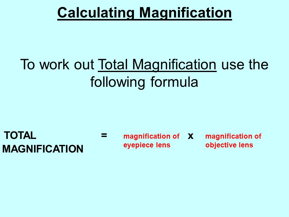 Calculating Magnification To work out Total Magnification use the following formula TOTAL = x MAGNIFICATION magnification of eyepiece lens magnification of objective lens