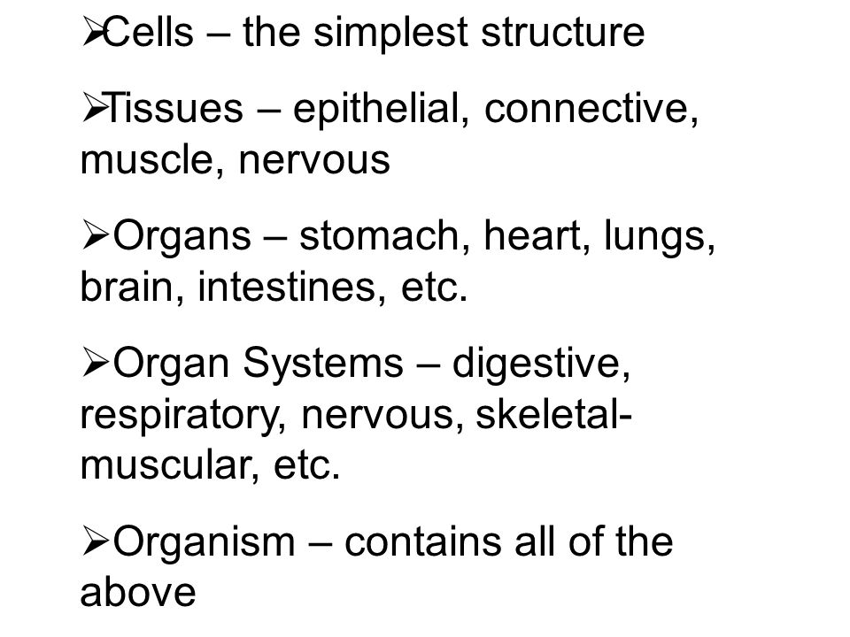  Cells – the simplest structure  Tissues – epithelial, connective, muscle, nervous  Organs – stomach, heart, lungs, brain, intestines, etc.  Organ