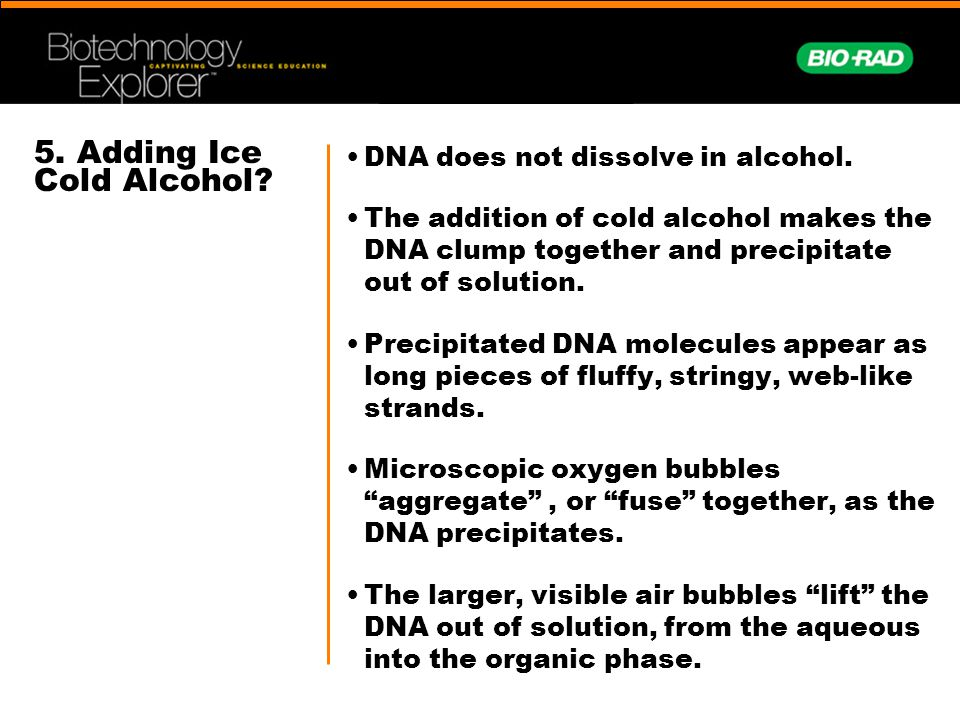 5.Adding Ice Cold Alcohol. DNA does not dissolve in alcohol.