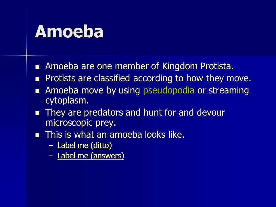 Amoeba Amoeba are one member of Kingdom Protista. Amoeba are one member of Kingdom Protista. Protists are classified according to how they move. Proti