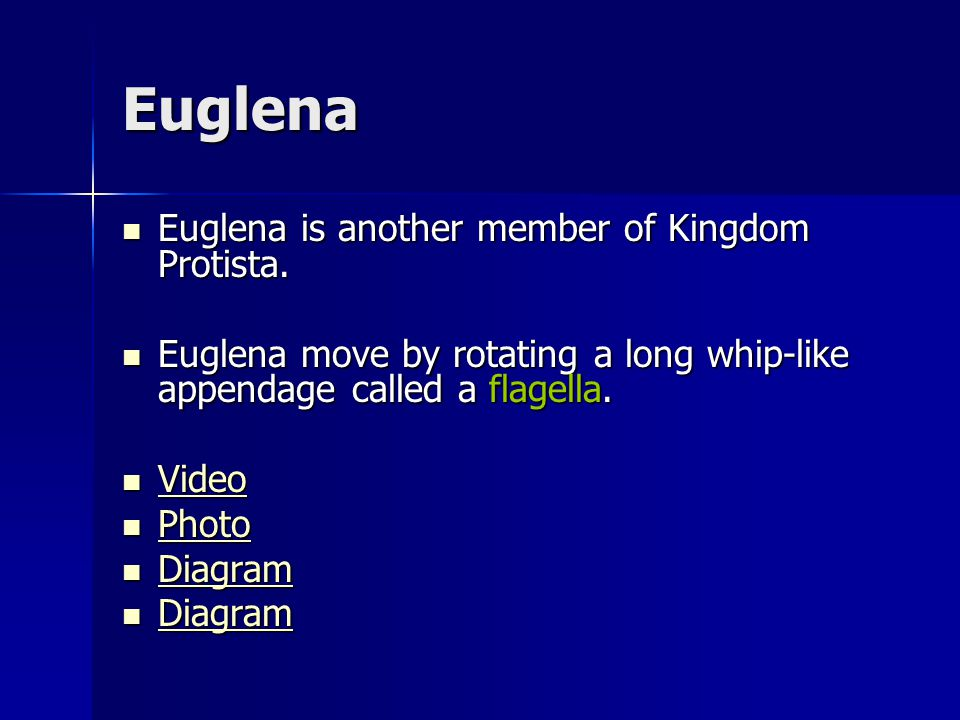 Euglena Euglena is another member of Kingdom Protista. Euglena is another member of Kingdom Protista. Euglena move by rotating a long whip-like append