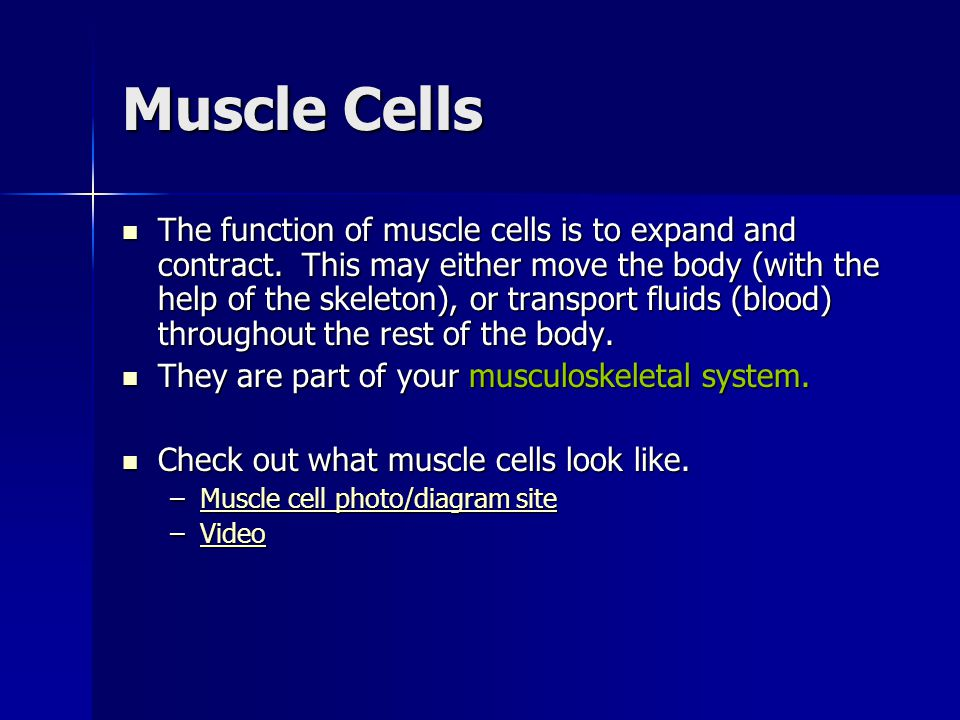 Muscle Cells The function of muscle cells is to expand and contract. This may either move the body (with the help of the skeleton), or transport fluid