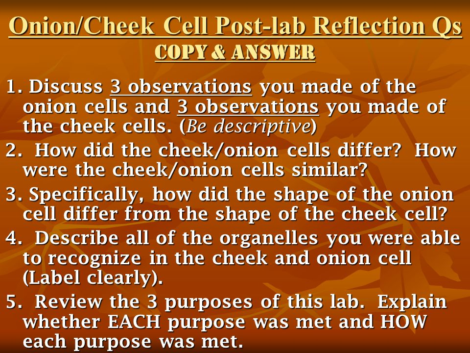 Onion/Cheek Cell Post-lab Reflection Qs Copy & Answer 1. Discuss 3 observations you made of the onion cells and 3 observations you made of the cheek c