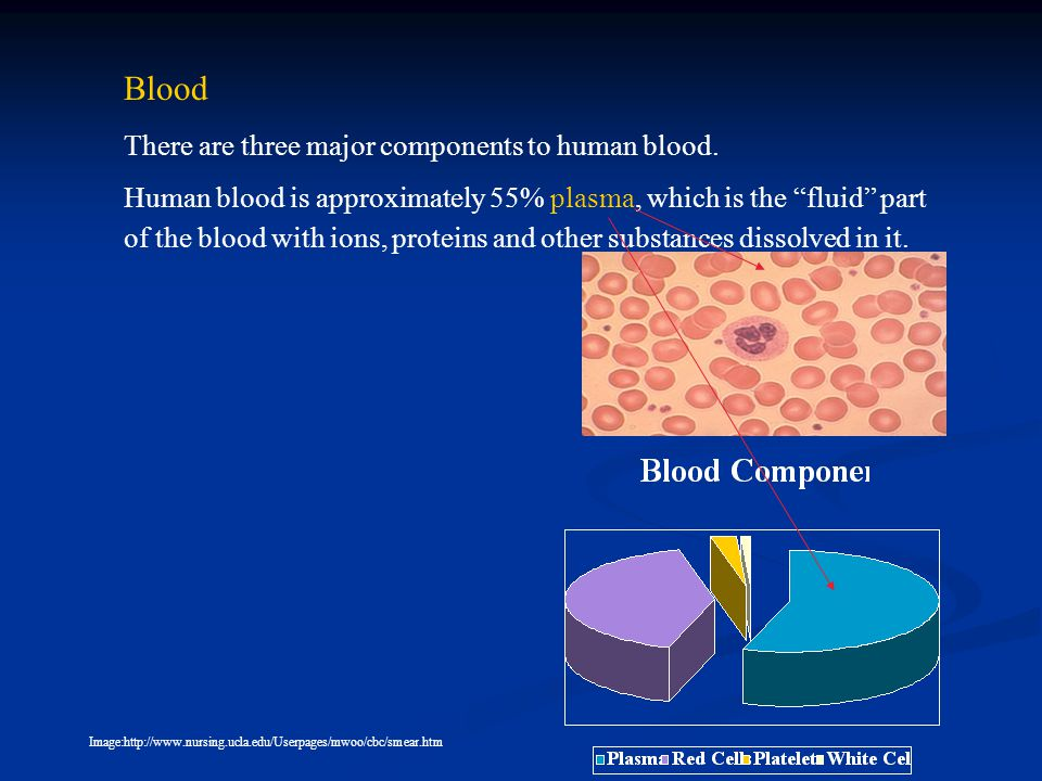 Blood Human blood is approximately 55% plasma, which is the fluid part of the blood with ions, proteins and other substances dissolved in it.