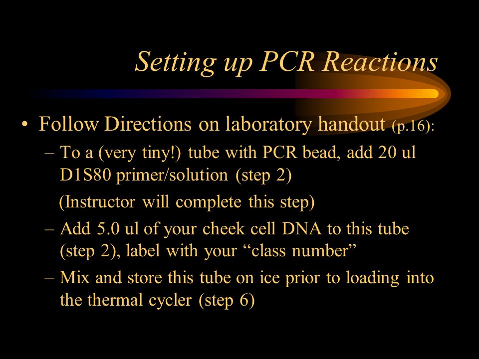 Setting up PCR Reactions Follow Directions on laboratory handout (p.16): –To a (very tiny!) tube with PCR bead, add 20 ul D1S80 primer/solution (step 2) (Instructor will complete this step) –Add 5.0 ul of your cheek cell DNA to this tube (step 2), label with your class number –Mix and store this tube on ice prior to loading into the thermal cycler (step 6)