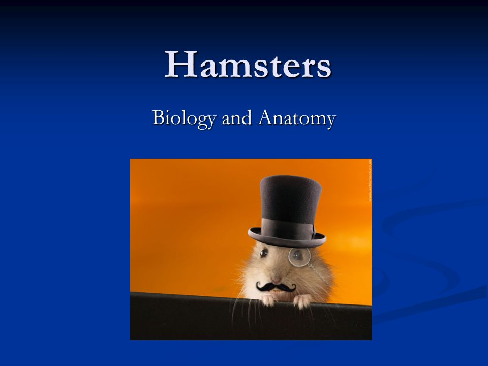 Hamsters Biology and Anatomy