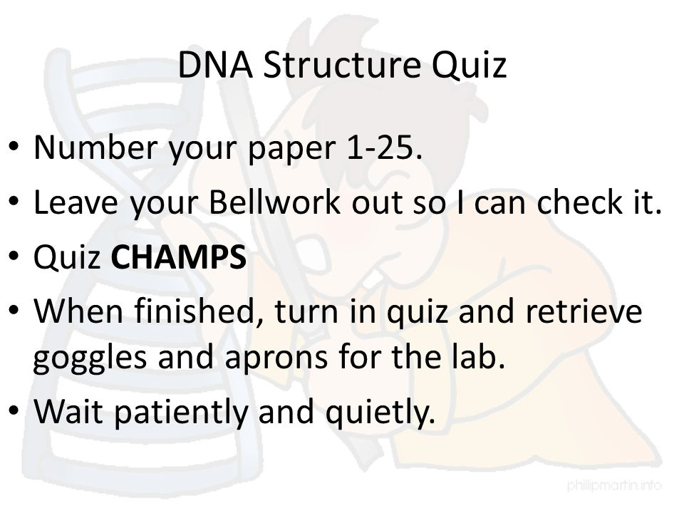 DNA Structure Quiz Number your paper 1-25. Leave your Bellwork out so I can check it.