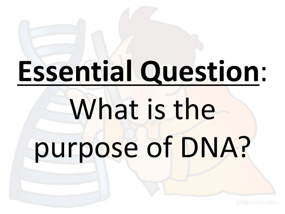 Essential Question: What is the purpose of DNA?