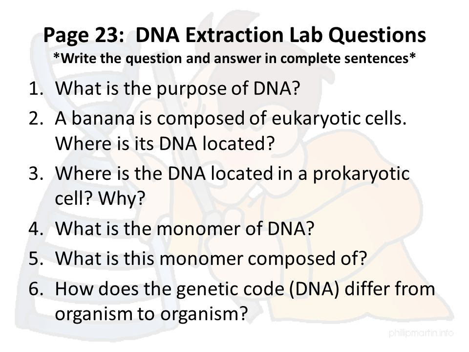 Page 23: DNA Extraction Lab Questions *Write the question and answer in complete sentences* 1.What is the purpose of DNA.