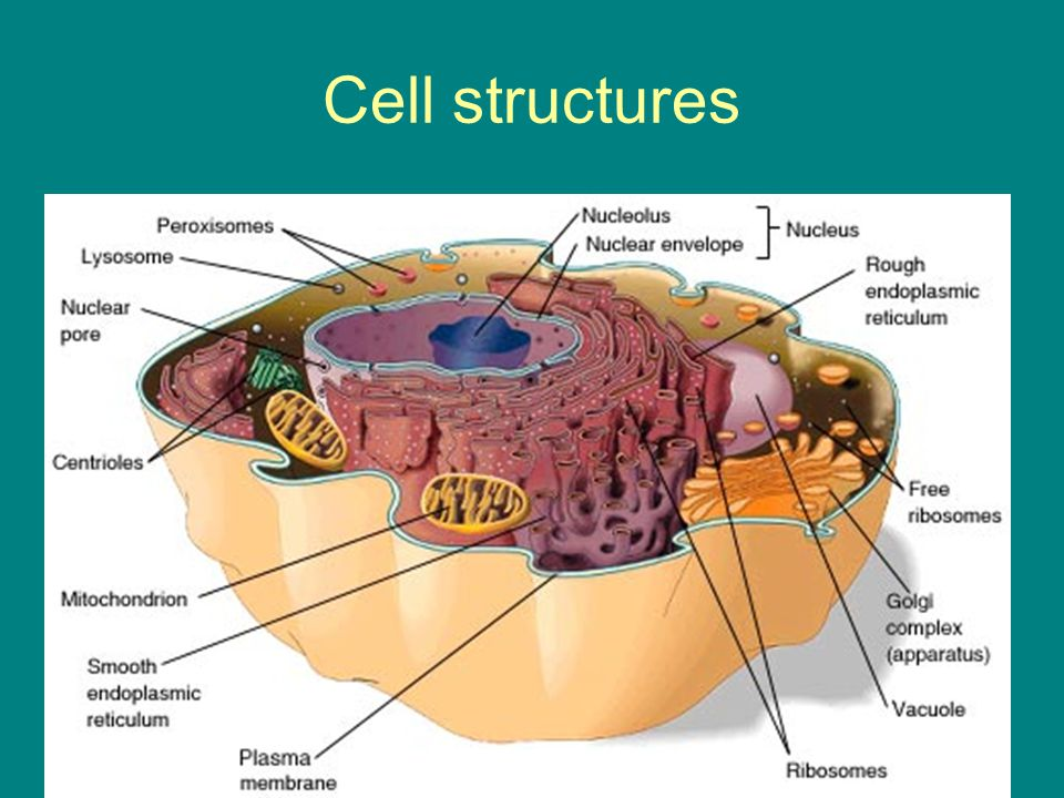 Cell structures