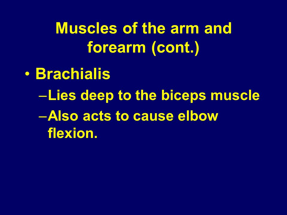 Muscles of the arm and forearm (cont.) Brachialis –Lies deep to the biceps muscle –Also acts to cause elbow flexion.