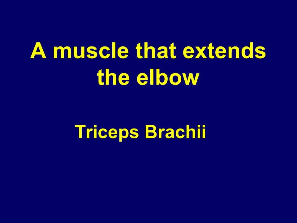 A muscle that extends the elbow Triceps Brachii