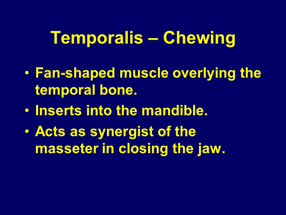Temporalis – Chewing Fan-shaped muscle overlying the temporal bone. Inserts into the mandible. Acts as synergist of the masseter in closing the jaw.