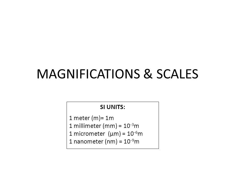 MAGNIFICATIONS & SCALES SI UNITS: 1 meter (m)= 1m 1 millimeter (mm) = 10 -3 m 1 micrometer (µm) = 10 -6 m 1 nanometer (nm) = 10 -9 m