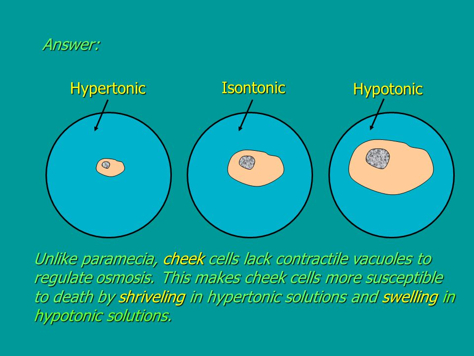 Answer:Hypertonic Isontonic Hypotonic Unlike paramecia, cheek cells lack contractile vacuoles to regulate osmosis.