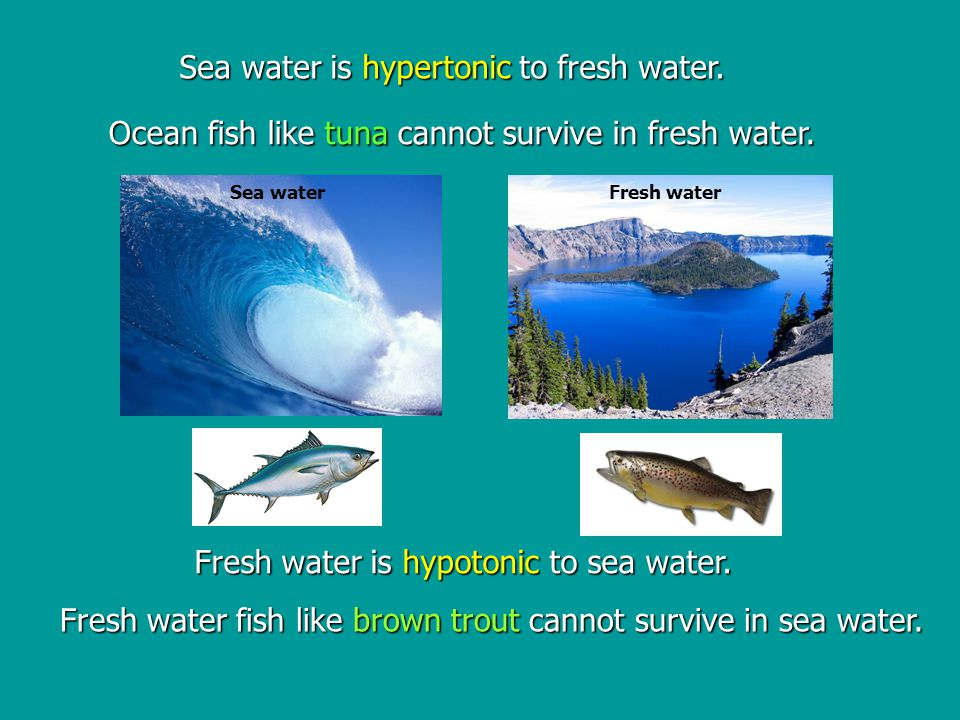 Fresh water is hypotonic to sea water.Sea water is hypertonic to fresh water.