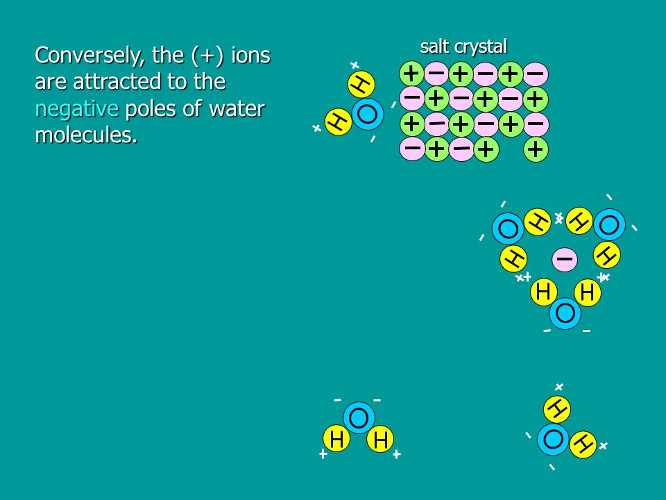 Conversely, the (+) ions are attracted to the negative poles of water molecules. salt crystal