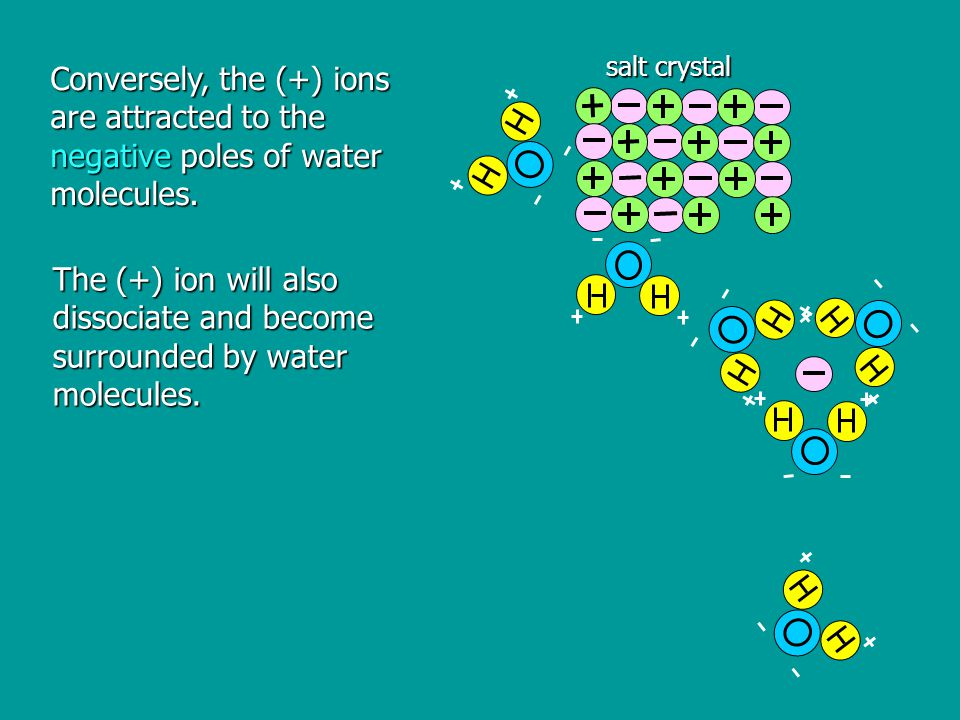Conversely, the (+) ions are attracted to the negative poles of water molecules.