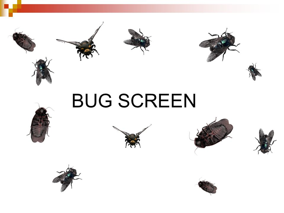 BUG SCREEN