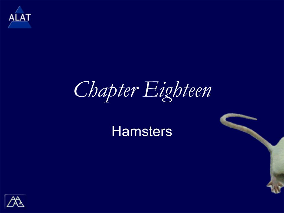 Chapter Eighteen Hamsters