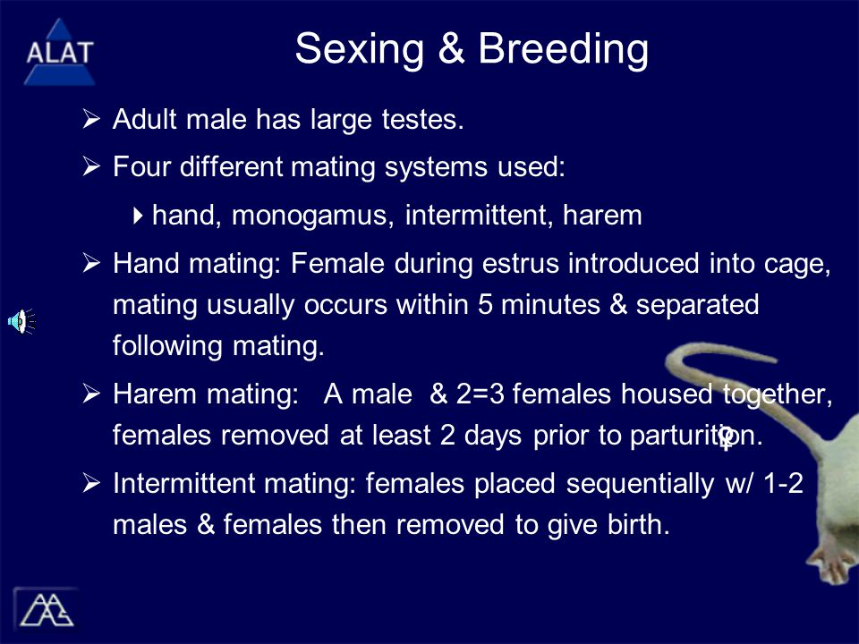 Sexing & Breeding  Adult male has large testes.
