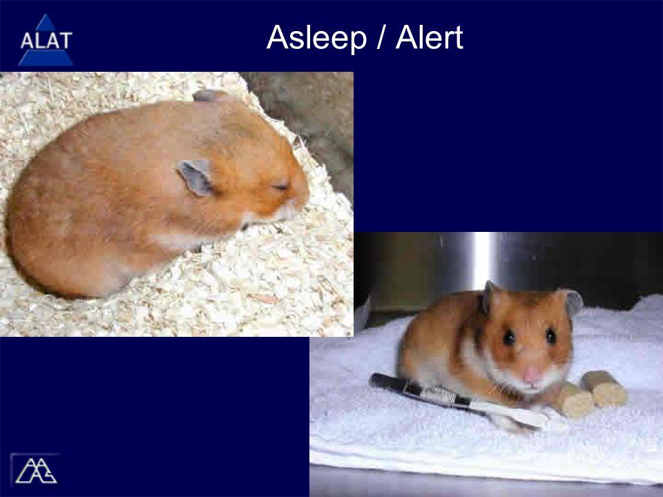 Asleep / Alert