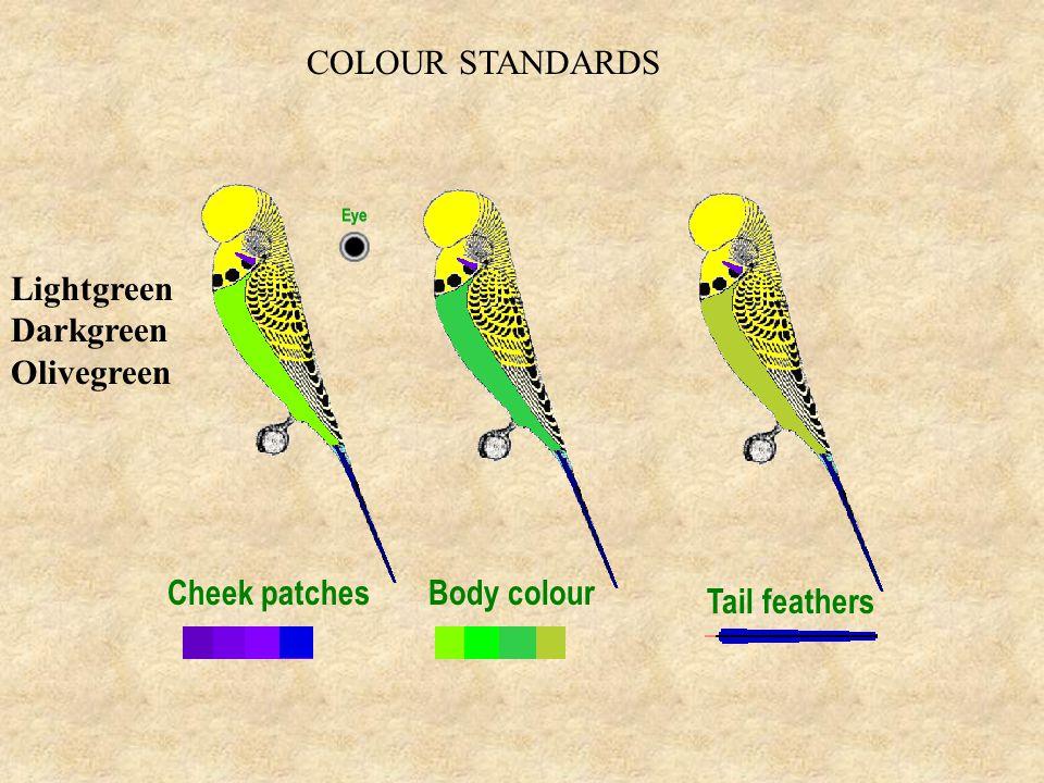 COLOUR STANDARDS Lightgreen Darkgreen Olivegreen Cheek patchesBody colour Tail feathers