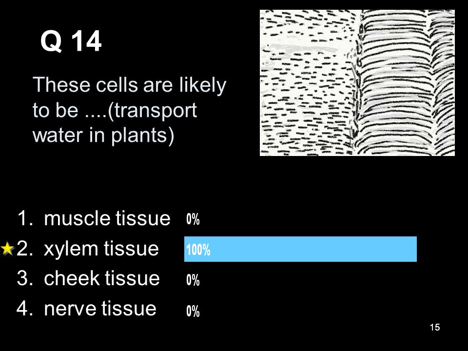 15 These cells are likely to be....(transport water in plants) Q 14 1.muscle tissue 2.xylem tissue 3.cheek tissue 4.nerve tissue