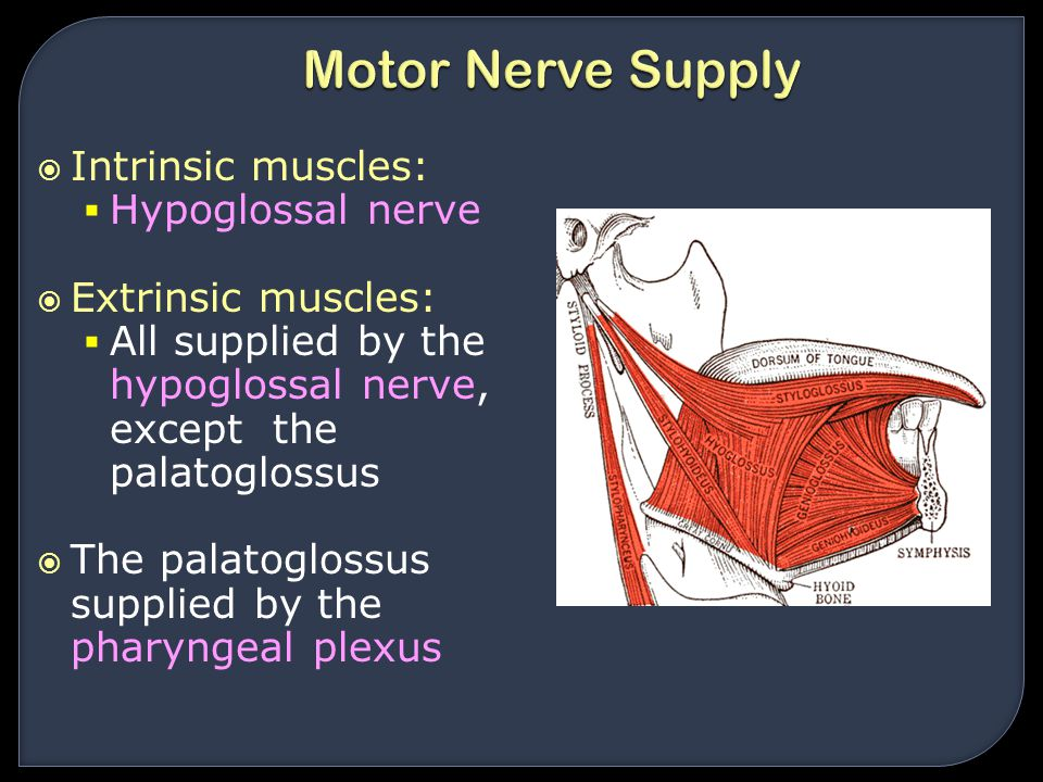  Intrinsic muscles:  Hypoglossal nerve  Extrinsic muscles:  All supplied by the hypoglossal nerve, except the palatoglossus  The palatoglossus su