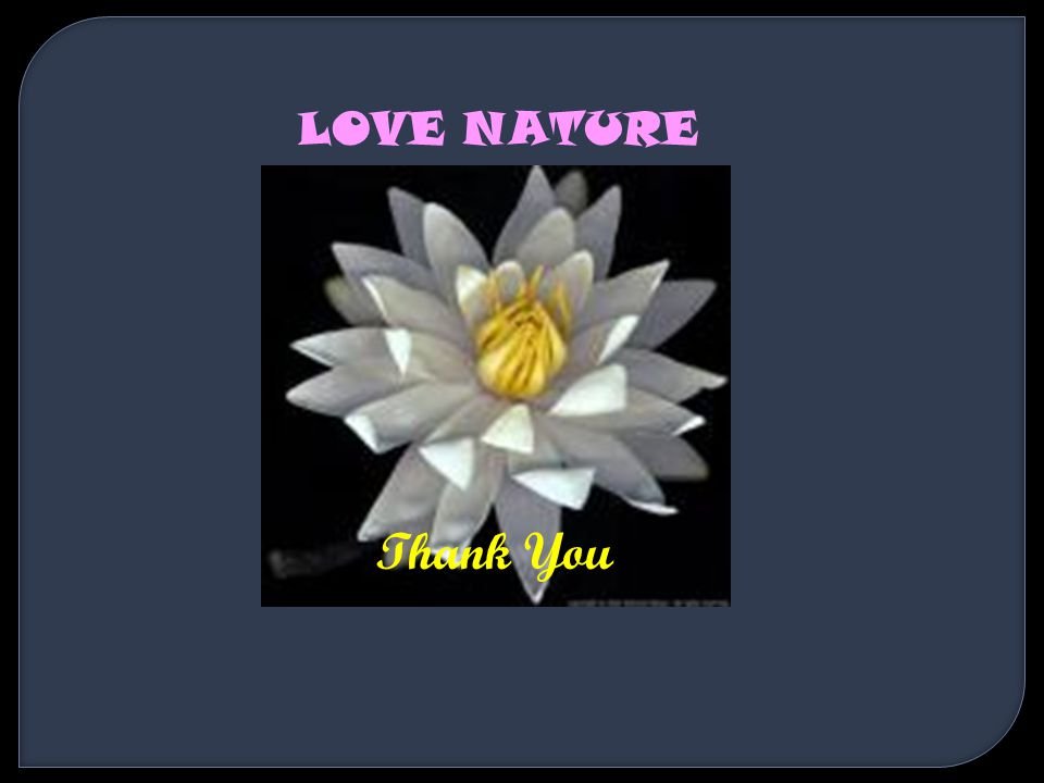 Thank You LOVE NATURE