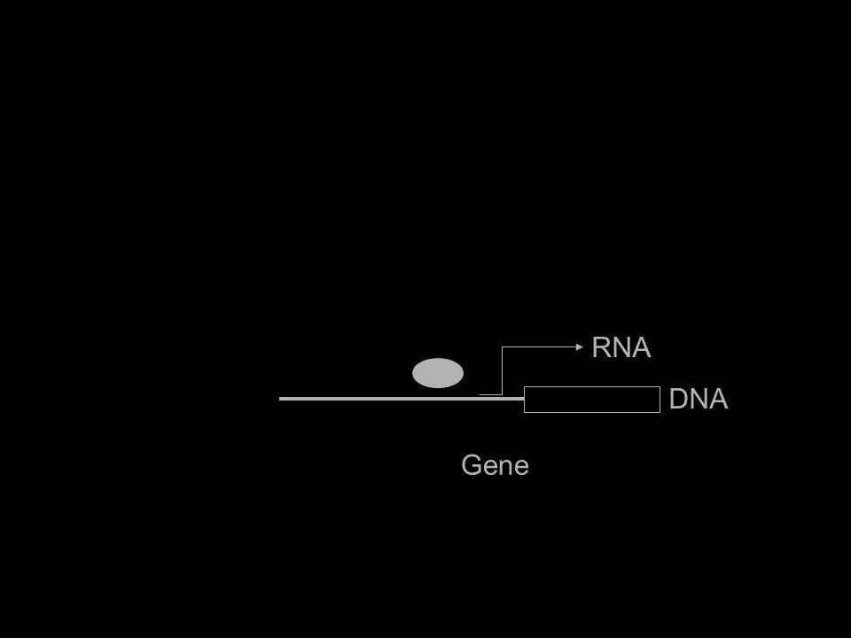 Gene IL6 RNA DNA