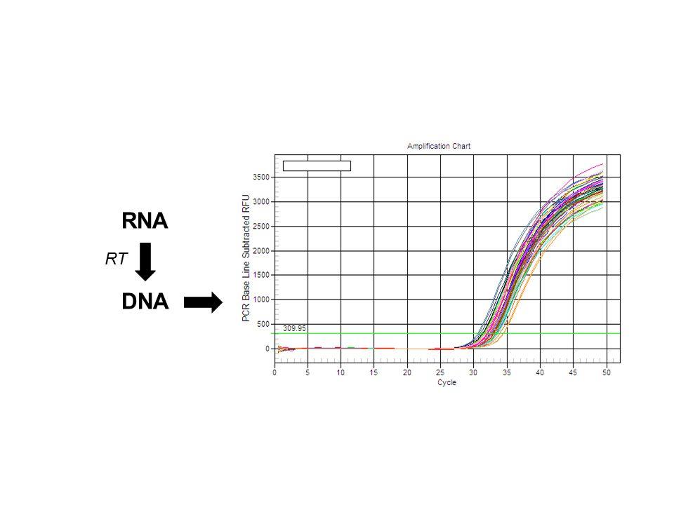 RNA DNA RT