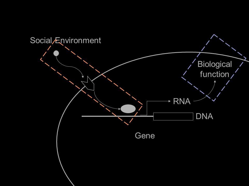 Social Environment Gene Biological function IL6 RNA DNA