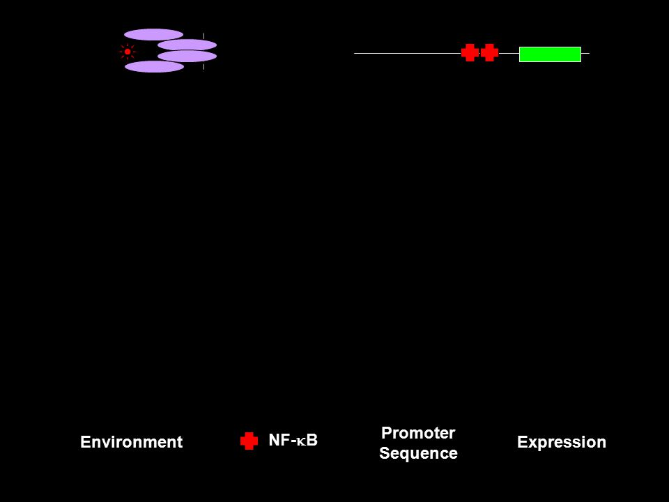 Sp1 CREB NF-  B Environment S equence Expression Promoter Sequence