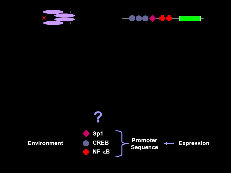 Sp1 CREB NF-  B Environment S equence Expression Promoter Sequence ?