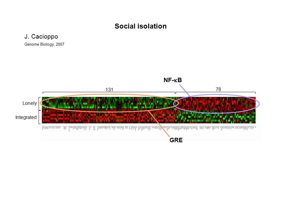 Lonely Integrated Social isolation J. Cacioppo Genome Biology, 2007 78 131 NF-  B GRE