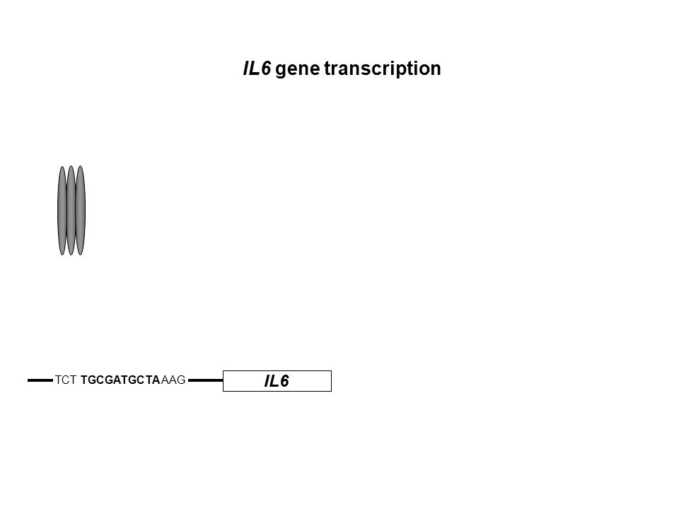 IL6 TCT TGCGATGCTA AAG IL6 gene transcription