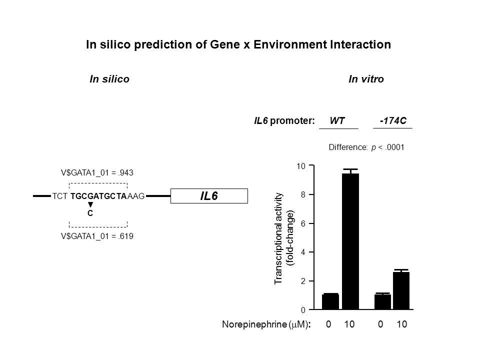 Transcriptional activity (fold-change) 10 8 6 4 2 0 IL6 promoter: WT -174C Norepinephrine (  M): 0 10 - 0 10 Difference: p <.0001 IL6 TCT TGCGATGCTA AAG C V$GATA1_01 =.943 V$GATA1_01 =.619 In silico prediction of Gene x Environment Interaction In silico In vitro