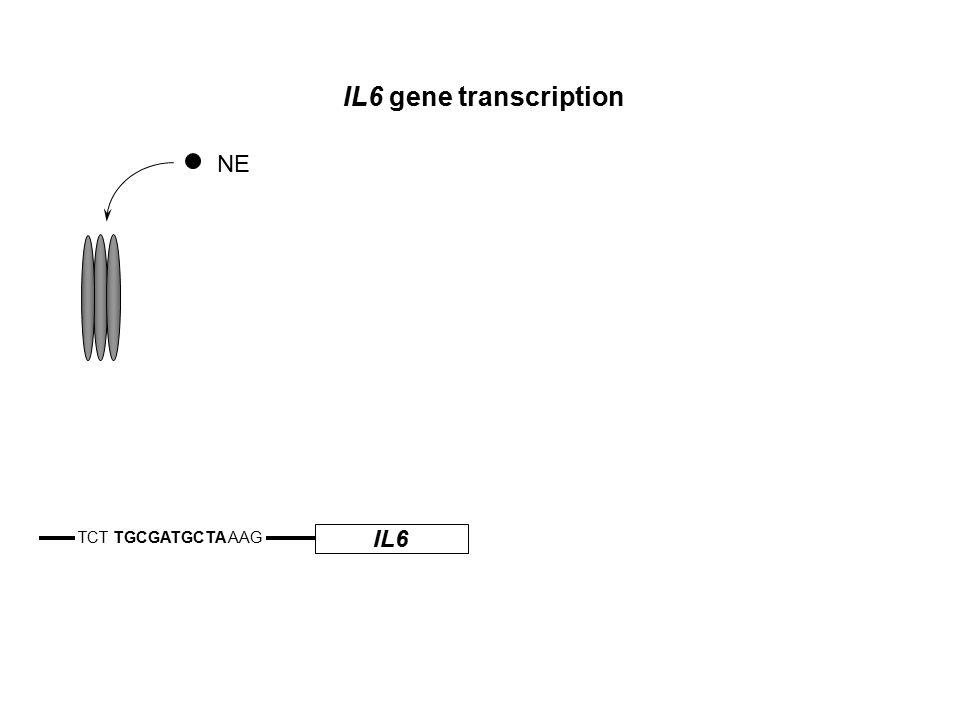 IL6 TCT TGCGATGCTA AAG IL6 gene transcription NE