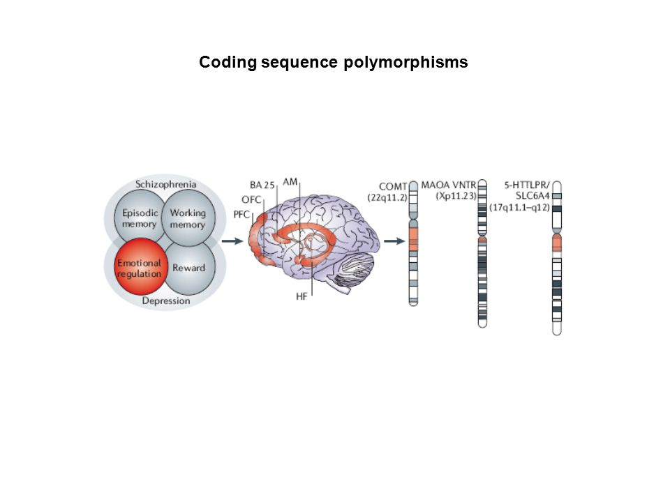 Coding sequence polymorphisms