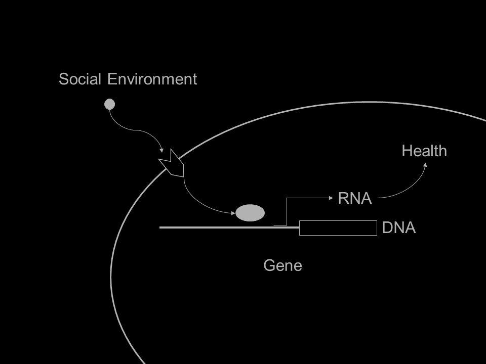 Social Environment Gene Health IL6 RNA DNA