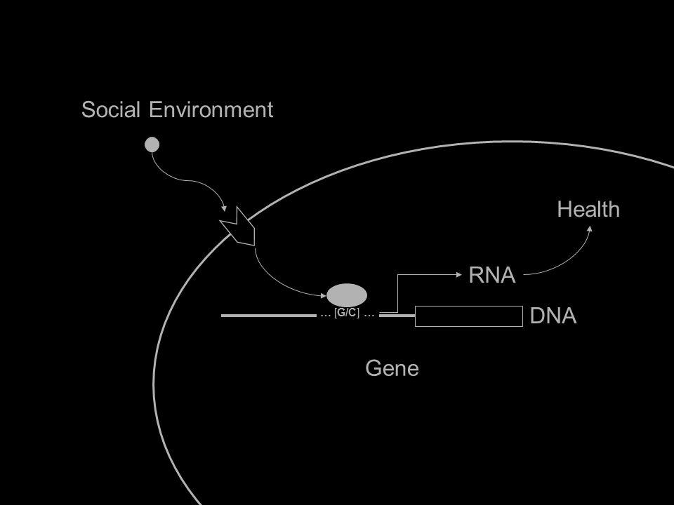 Social Environment Gene Health IL6 … [G/C] … RNA DNA